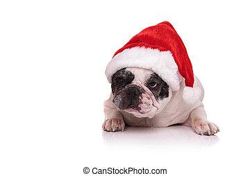french bulldog wearing santa claus red hat