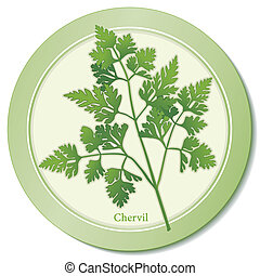 French Chervil Herb Icon - Chervil herb icon, delicate, lacy...