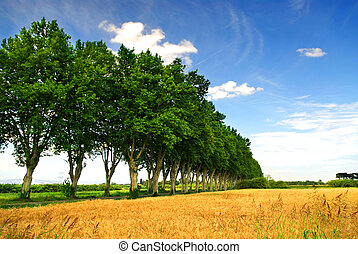 French country road - Landscape with a country road lined ...