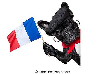french dog