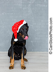 french dog head with tongue hanging out in santa claus hat