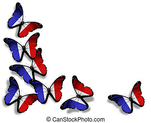 French flag butterflies, isolated on white background