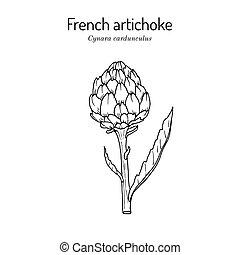French, globe or green artichoke