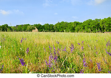 French landscape with wild