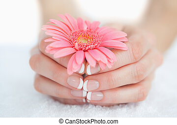 French manicured hands holding flower - Close-up of french...