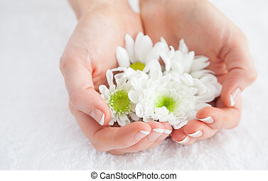 French manicured hands holding flowers - Close-up of french...