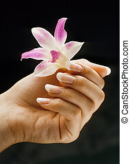 French manicured nails - Woman\'s hand with french manicured...