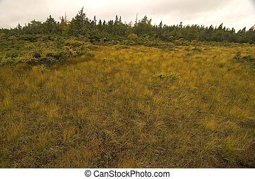 French Mountain Bog, Cape Breton Highlands National Park, Nova Scotia, Canada