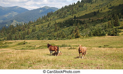 French mountains with green grass and horses from the Aravis pass, France, The Alps