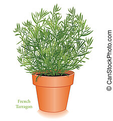 French Tarragon herb plant in clay flowerpot. Anise flavored leaves to flavor chicken, fish, salads, omelets, vinegars. Ingredient of classic French blend, Fines Herbes. EPS8 compatible.