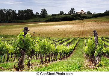 French vineyard along the Garonne river