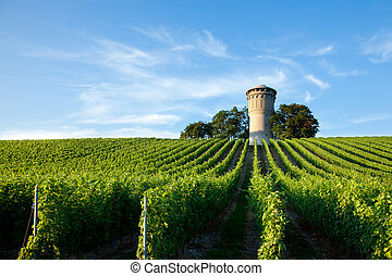 French vineyard - Beautiful lush, green vineyard rising into a perfect blue sky