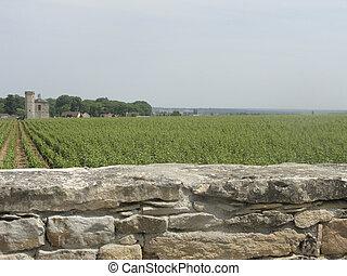 French vineyard in Burgundy