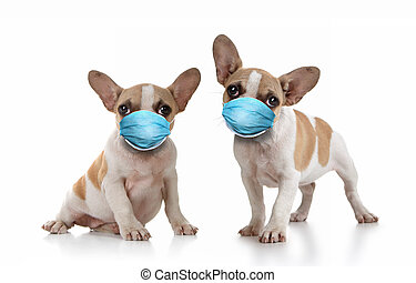 Frenchie Puppy Dogs Wearing PPE Mask - Sitting Puppy Dogs ...