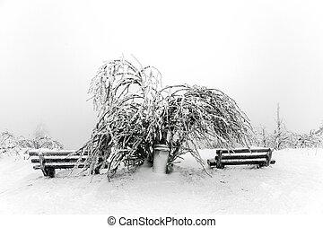 frente, árboles, nieve, ventisca, pino