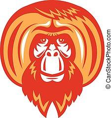 frente, barbudo,  Retro,  orangután