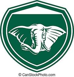 frente, cabeza, elefante, protector, colmillo