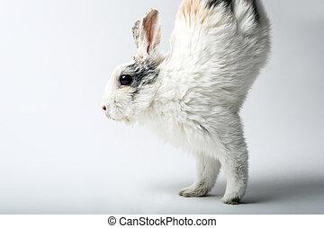 frente, corre, patas, dos, conejo