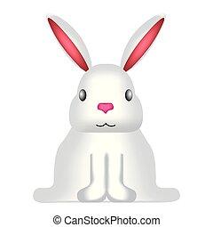 frente, cute, coelho, vista
