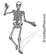 frente, esqueleto, humano