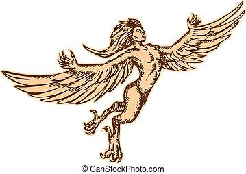 frente, vuelo, harpy, aguafuerte