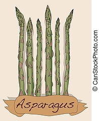 Fres asparagus vector isolated on white