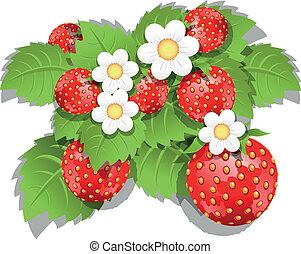 fresa, arbusto