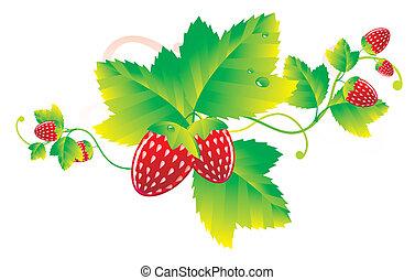 fresa, hojas, bayas