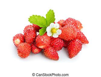 fresa salvaje, flower.