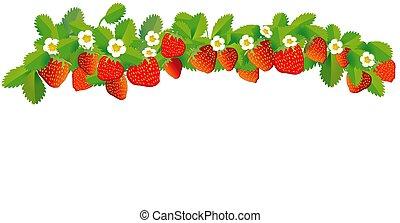 fresas, vector, fila, ilustración, -