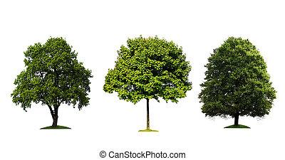 fresco, árvores verdes, isolado, branco, fundo