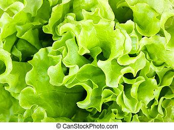 fresco, alface verde, salada