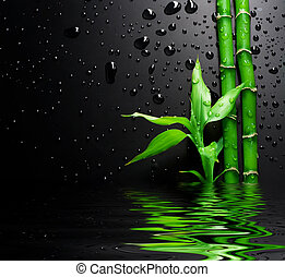 fresco, bambú, encima, negro
