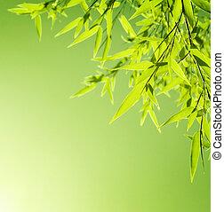 fresco, bambu, borda, folhas