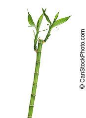 fresco, bambu, folhas, caule
