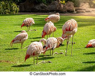 fresco, bello, rosa, immagine, erba, prato, verde, uccelli, parco, gregge, fiammeggiante