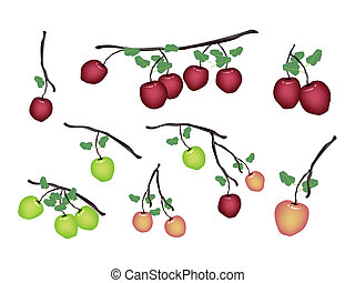 fresco, bianco, set, mela, fondo