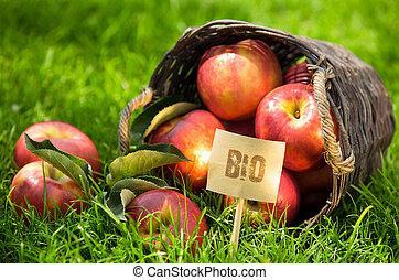 fresco, bio, manzanas, en la exhibición, en, mercado