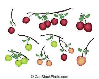fresco, blanco, conjunto, manzana, plano de fondo