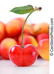 fresco, branca, cerejas, isolado, maduro