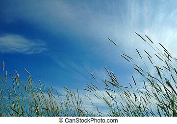 fresco, capim, em, luz sol, e, céu, experiência
