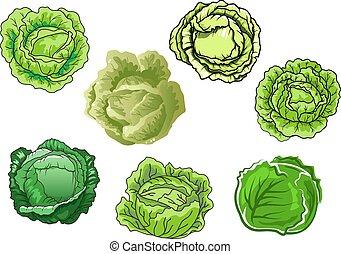 fresco, cavolo, verdure verdi, isolato