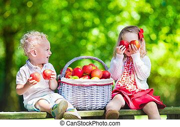 fresco, colheita, crianças, maçãs