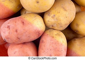 fresco, colhido, tubers, batata