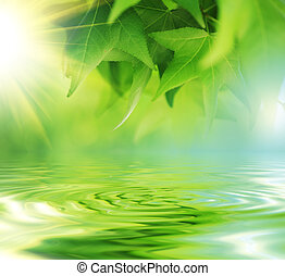 fresco, congedi verdi, sopra, acqua