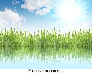 fresco, erba