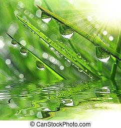 fresco, erba, con, gocce rugiada