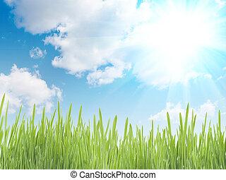 fresco, erba, verde