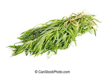 fresco, estragão, erva
