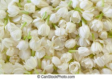 fresco, flor, jazmín, plano de fondo